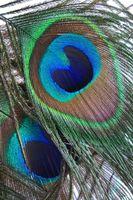 Cómo elegir plumas de pintura acrílica
