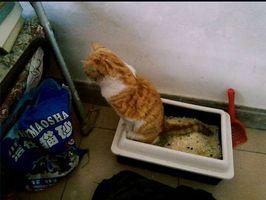 ¿Qué es conformada por gatos?