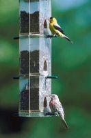 Cómo decorar el exterior de un árbol para aves