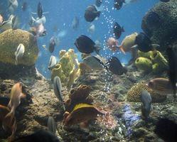 ¿Cómo puedo reducir el crecimiento de algas en un acuario de agua salado?
