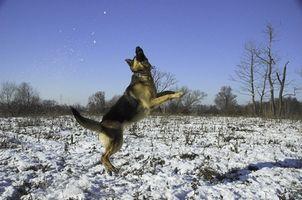 Displasia de cadera en perros y cortisona