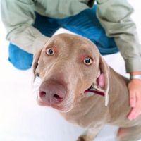 Los signos de la convulsiones en perros