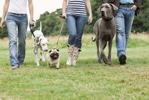 Cómo aclimatar los perros entre sí