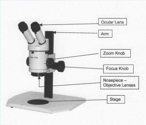Define microscopio de disección