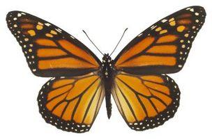 Cómo hacer una mariposa en el programa de mejoramiento
