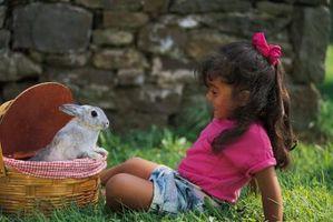 Cómo alimentar a los conejos recién nacidos cuando la madre no