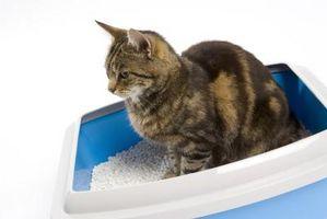 Cómo caja tren de camada un gato salvaje