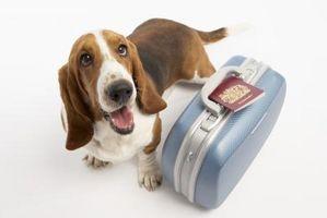 Lista de viaje para mascotas