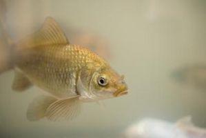 Cómo reducir la alcalinidad en un acuario