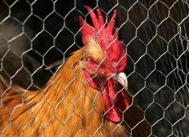 Alternativas para gallineros