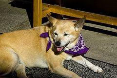 Parásitos y la diarrea en perros
