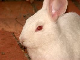 Cómo hacer un aparador de conejo fuera de