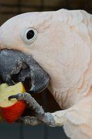 Las mejores frutas y verduras para cacatúas