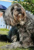 Frontline Plus para perros los efectos secundarios