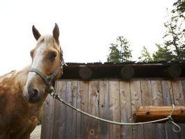 Cómo enganchar encima de un caballo a un poste de equipo