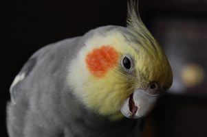 La ley de aves silvestres