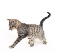 Cómo dibujar un gato de dibujos animados paso a paso