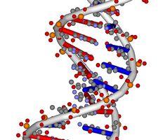 Papel de los ácidos nucleicos