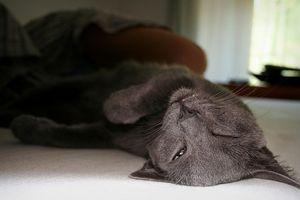 Suplementos de la enzima para gatos