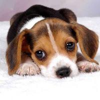 Signos de envenenamiento en perros