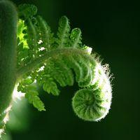 ¿Por qué híbridos planta estéril?