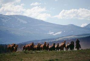 Curas para problemas en los caballos de respiración