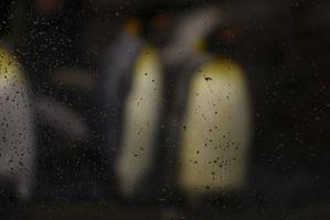 Cómo limpiar los recintos del pingüino