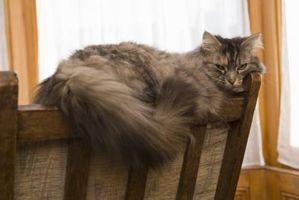 Cómo entrenar a un gato para escaleras
