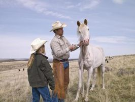 Cómo transportar un caballo de los E.e.u.u. en Canadá