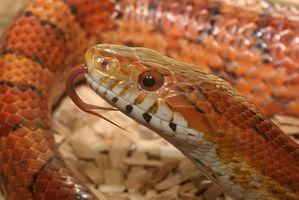 Reptiles que se pueden mantener en pequeños acuarios