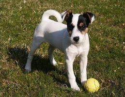 Efectos secundarios de vacunas de cachorro