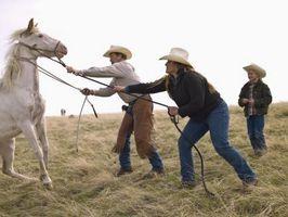 Cómo atar patas traseras de un caballo