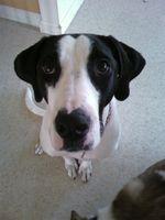 Tratamiento de la sarna para perros