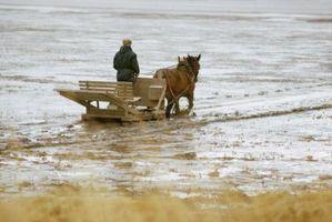 Cómo limpiar la capa fangosa de un caballo
