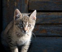Cómo detener a un gato con repelente