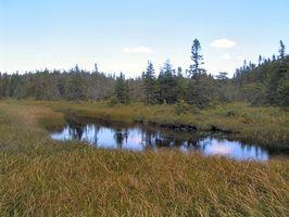 Los efectos de las aguas residuales en los ecosistemas acuáticos
