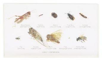 Los ingredientes activos en el champú de pulgas