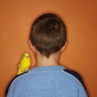 Cómo a mano polluelos de canario