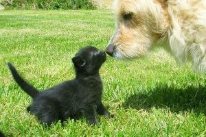 Soplos cardíacos y convulsiones en los perros