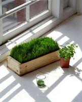 Segundo grado Ciencias experimentos sobre fotosíntesis