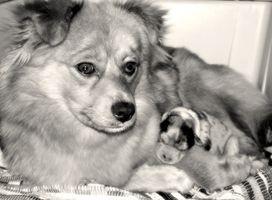 Signos y síntomas de la depresión después del parto en perras
