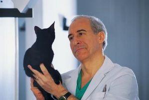 Signos y síntomas de la rabia en gatos