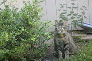 Al aire libre plantas perjudiciales para los gatos y perros