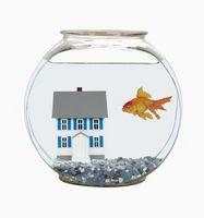¿Qué tipo de peces puede vivir en un tanque con un Severum Cichlid azul turquesa?