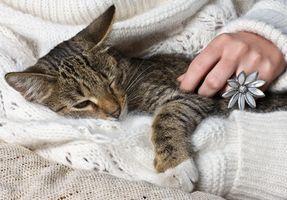 Tratamiento en frío felino
