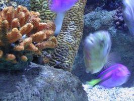 Recursos de peces de acuario peces