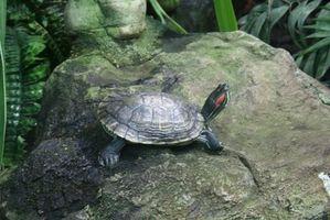 Lesiones de tortuga acuática