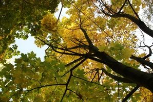 Cómo planear una boda temática de otoño ducha
