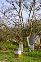 Cómo hacer divisiones en la apicultura
