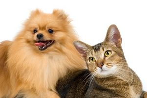 Cómo cuidar de los perros callejeros y gatos
